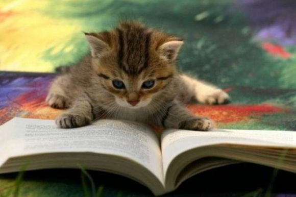 Cat_CatReadingBook03